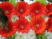 Arrangemanet del fiore fotografia stock libera da diritti