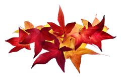Arrangement of autumn leaves Royalty Free Stock Images