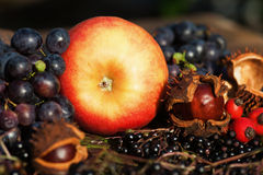 Arrangement of autumnal fruits Stock Image