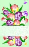 Arrangement of tulips. Stock Photo