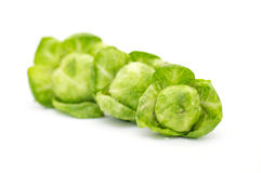 Arrangement of brussels sprouts. Isolated on white background Royalty Free Stock Photo