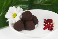 Arrangement of chocolate truffles. With daisy and leafs Stock Images