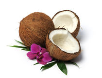 Arrangement with coconuts Royalty Free Stock Images