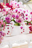 Arrangement colorful moth orchids royalty free stock image