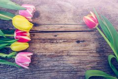 Arrangement of colorful tulips on a rustic wooden table, text space. Colorful spring flowers (tulips) are lying on a rustic wooden table, view from stock images