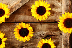 Arrangement of colorful yellow sunflowers Stock Photography