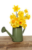 Daffodil arrangement Royalty Free Stock Image