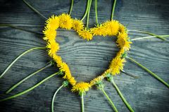 Arrangement of dandelions in the heart shape on dark background Royalty Free Stock Images