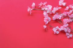 Arrangement decoration Chinese new year & lunar festival concept background. Beautiful pink blossom on modern red wood wallpaper at home office desk.Free space stock image