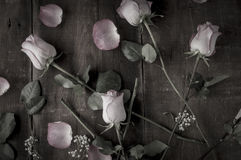 Arrangement of Desaturated Roses Royalty Free Stock Image