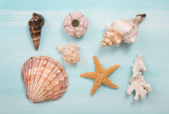 Arrangement of different shells on blue or turquoise wooden back Royalty Free Stock Photo