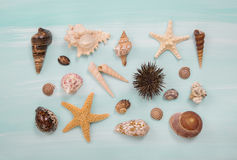 Arrangement of different shells and starfishes on blue or turquo Royalty Free Stock Images