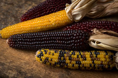 Arrangement of Dried Corn Royalty Free Stock Photo