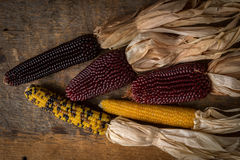 Arrangement of Dried Corn Royalty Free Stock Images
