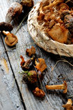Arrangement of Dried Mushrooms Stock Photo