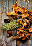 Arrangement of Dried Mushrooms Royalty Free Stock Photos