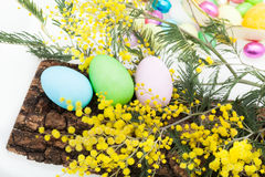 Arrangement With Easter Eggs And Mimosa Royalty Free Stock Photo