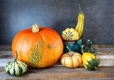 Arrangement of fall decorative pumpkins and gourds on natural rustic wooden background Royalty Free Stock Photography