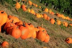 Arrangement of Fall's colorful pumpkins at market Stock Image