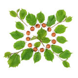Arrangement of filbert nuts with leaves on white. Flat lay, top view. Stock Images