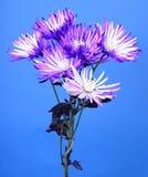 Arrangement floral Photo libre de droits