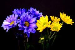 Arrangement floral bleu et jaune Images libres de droits