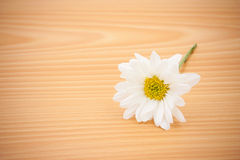 Arrangement flower on wooden with empty space Stock Image