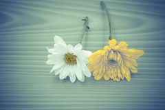 Arrangement flower on wooden with empty space background Royalty Free Stock Photography