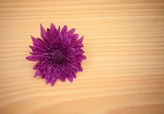 Arrangement flower on wooden with empty space Stock Photography