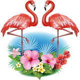 Arrangement from flowers and Flamingos. Arrangement from tropical flowers and Flamingos Royalty Free Stock Photos