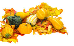Arrangement of gourds on leaves Stock Photo