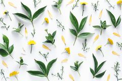 Arrangement With Leaves And Yellow Flowers. Arrangement with leaves and flowers on white background Stock Images