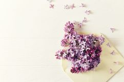 An arrangement of lilac flowers in an envelope. Copy space. Top view. Horizontal Royalty Free Stock Photography