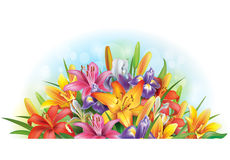 Arrangement of lilies and irises. Arrangement of colorful  lilies and irises Stock Images