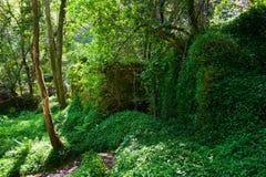 Arrangement naturel des arbres et de la végétation Images libres de droits
