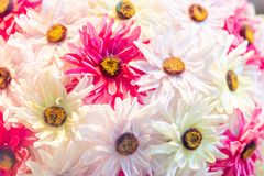 Arrangement op white flowes and some pink in between. Frame filling royalty free stock photo