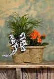 Arrangement with Orange Flowers. Basket Flower Arrangement with Orange Flowers Stock Photos