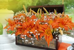Arrangement from Orange LilySpring Flowers in Wooden Basket with Green Garden Background. toned. Arrangement from Orange LilySpring Flowers in Wooden Basket Royalty Free Stock Photos