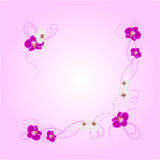 Arrangement of orchid flowers. On pink background for greeting card or invitation design Stock Images