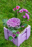 Arrangement of ornamental cabbage Stock Photography