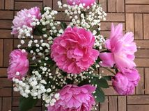 Arrangement of pink peonies Stock Image