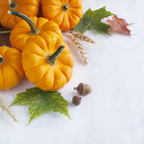 Arrangement from Pumpkin and maple leaves Royalty Free Stock Image