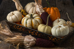 Arrangement of Pumpkins and Dried Corn Royalty Free Stock Images