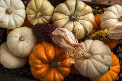 Arrangement of Pumpkins and Dried Corn Stock Photography