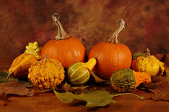 Arrangement of pumpkins and squashes Royalty Free Stock Photos