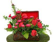 Arrangement of red flowers in a wooden case. On white background Royalty Free Stock Images