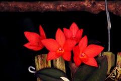 Arrangement of red orchid flowers. Wonderful tropical set of red orchid flowers Stock Photography