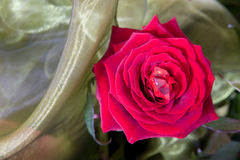 Arrangement with red rose. Red rose with cut glass and green textile royalty free stock photos