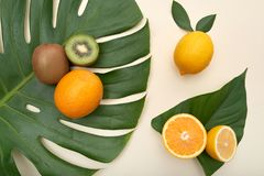 Arrangement of ripe citrus on green leaves stock photography