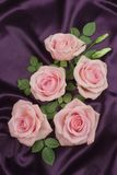 Arrangement of roses. On a dark background Stock Images